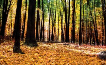 Wald Herbst Natur Fototapete