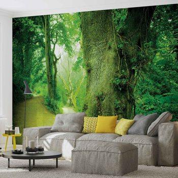 Wald Natur Baum Fototapete