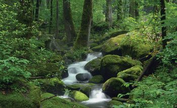 Wald Wasserfall Felsen Natur Fototapete