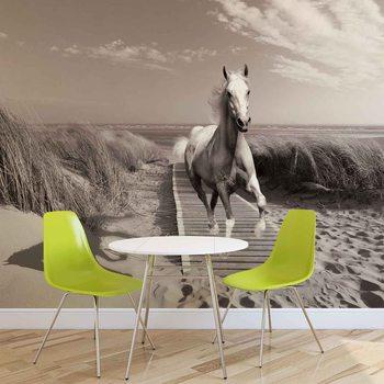 Weißer Pferd Strand Grau Fototapete