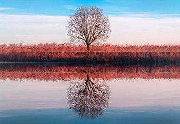 Windtree Fototapete