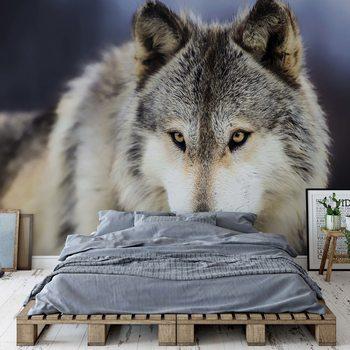 Wolf Fototapete