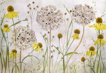 Alliums And Heleniums Fototapet