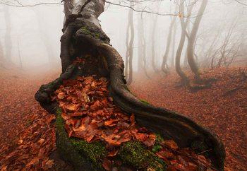 Ancient Tree Fototapet
