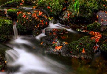 Autumn Melodies Fototapet
