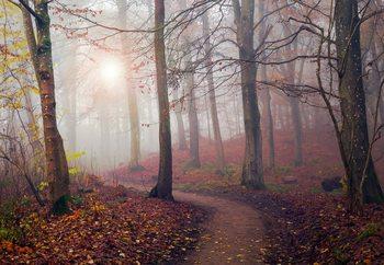 Autumn Sun Fototapet