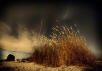 Beachgrass Fototapet