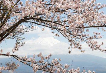 Cherry Blossom Tree Fototapet