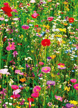 FLOWER FIELD Fototapet