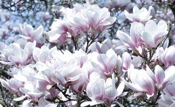 Flowers Magnolia Fototapet
