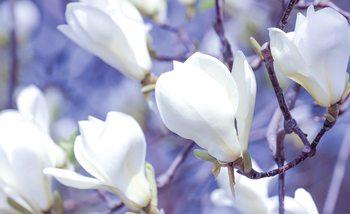 Flowers Magnolia Nature Fototapet