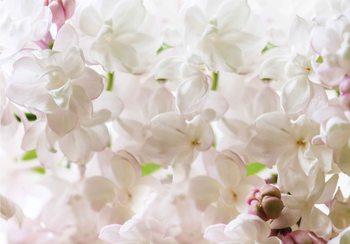 Flowers Spring Blossom Fototapet