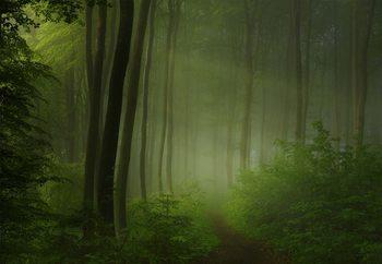 Forest Morning Fototapet
