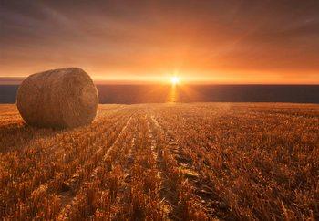 Gold Harvest Fototapet