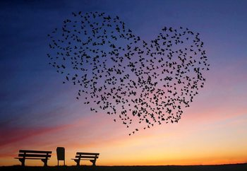 Love Is In The Air Fototapet
