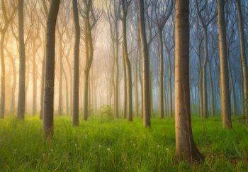 Misty Morning Fototapet