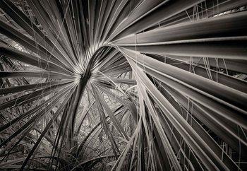Palm Tree Leave Fototapet