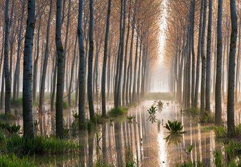 Rains Of Spring Fototapet