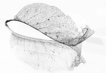 The Old Leaf Fototapet