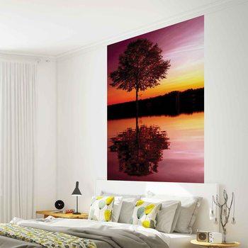 Tree Lake Reflection Sunset Nature Fototapet