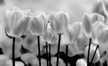 Tulip Flowers Fototapet