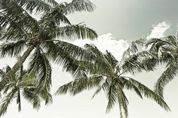 Vintage Palm Trees Fototapet