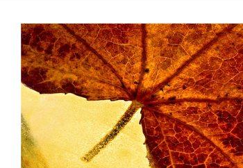 When Autumn Slides Into Winter Fototapet