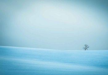 Winter In Solitude Fototapet