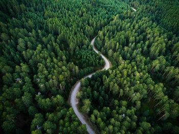 Fototapeta Aerial road crossing the forest