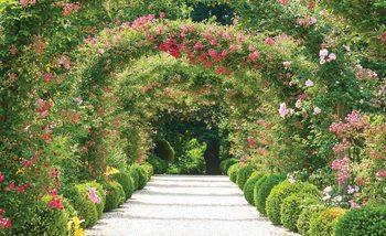 Fototapeta Alej, zahrada, záhon růží