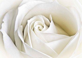 Białe kwiaty Fototapeta