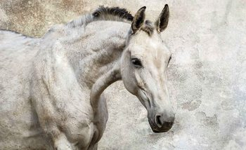 Fototapeta  Biely kôň