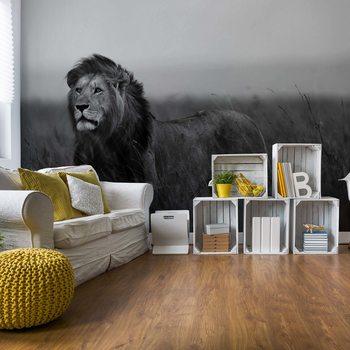 Black And White Lion Fototapeta