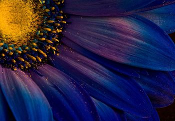Blue Rays Fototapeta