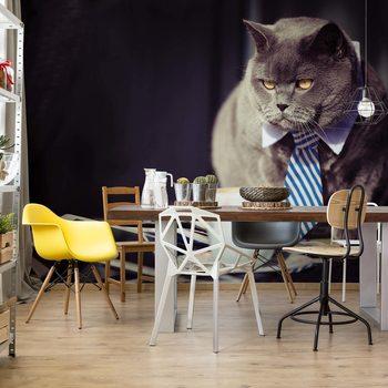 Fototapeta Cat Boss