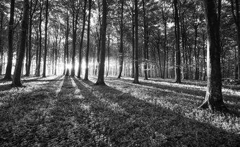 Czarno-biały las z prześwitującym słońcem Fototapeta