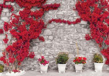 Czerwone kwiaty na tle kamiennego muru Fototapeta