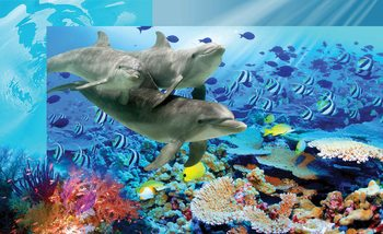 Delfiny wśród rafy koralowej Fototapeta