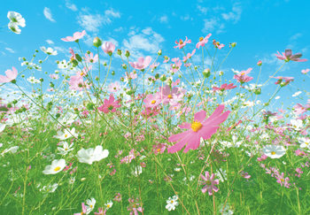 FLOWER MEADOW Fototapeta