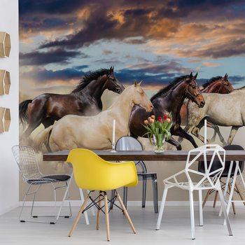 Galloping Horses Fototapeta