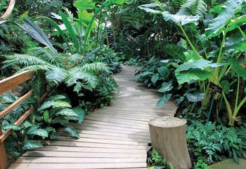 Fototapeta Jungle Path