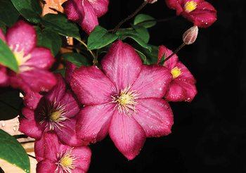 Kolorowe kwiaty Fototapeta