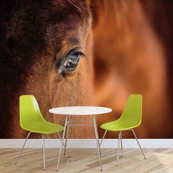 Koń Pony Fototapeta