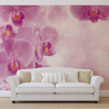 Fototapeta Květiny, Orchidej