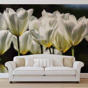 Fototapeta Květiny - tulipány