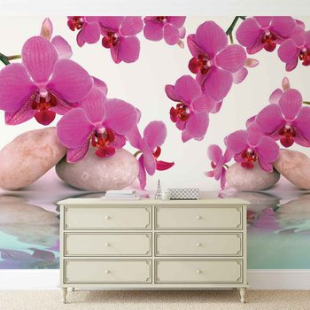 Fototapeta Kvety, Orchidea