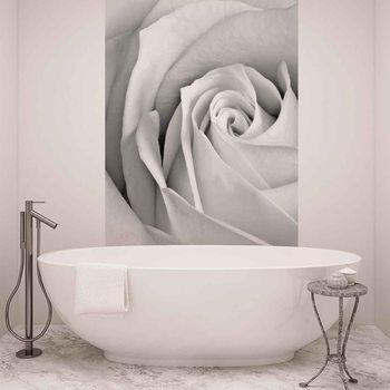 Kwiat róży Fototapeta
