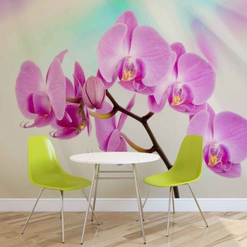 Kwiaty Orchidee Fototapeta