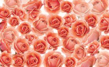 Kwiaty Róże Czerwone Fototapeta