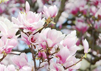 Fototapeta Magnolie květy 104x70.5 cm - 130g/m2 Vlies Non-Woven